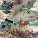 Ikan Laut Penyubur Kandungan Yang Sangat Penting