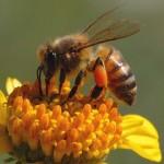 Ketahui Empat Sifat Lebah yang Harus Ditiru Manusia